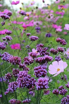 My Favorite Plant Combinations 57 (My Favorite Plant Combinations . - My Favorite Plant Combinations 57 (My Favorite Plant Combinations Design Ideas and Photos – Pink and Purple make a perfect combination – Garden Types, Beautiful Gardens, Beautiful Flowers, Beautiful Pictures, Purple Garden, Purple Plants, Garden Cottage, Garden Borders, Back Gardens