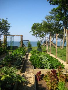raised bed garden, look at the setting!
