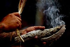 Clean and purify your home with high quality sage for smudge sticks. Kokoro Living is the leading seller of organic smudge sticks.
