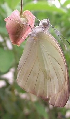 Wing structure