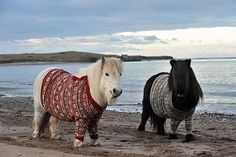 It's a pony...                                   ...with a sweater... ...with a friend...                                   ...with a sweater!