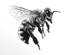 Pen and ink drawing of a bee