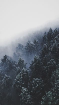 50+ Beautiful Winter Aesthetic Wallpapers You'll Love!