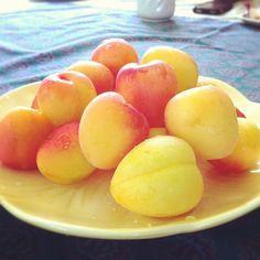Apricots Photo by sweetgeorgia • Instagram