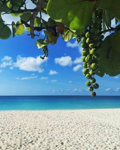 Every day is a beach day in Aruba!