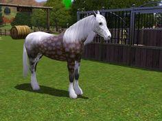 Foal11+%282%29.jpg 1024×768 képpont