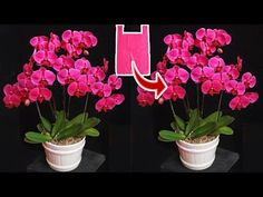 How to make orchid flower from plastic bag - flower crafts ideas Handmade Flowers, Diy Flowers, Flower Stamen, Arts And Crafts, Diy Crafts, Plastic Cups, Flower Crafts, Flower Making, Artificial Flowers