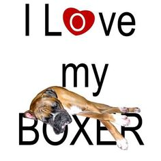 Image detail for -Love My Boxer Graphics Code | I Love My Boxer Comments & Pictures