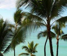 Palm trees ♡