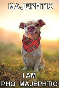 Majephtic Dog  // funny pictures - funny photos - funny images - funny pics - funny quotes - #lol #humor #funnypictures