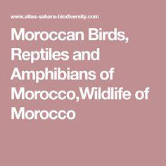 Moroccan Birds, Reptiles and Amphibians of Morocco,Wildlife of Morocco