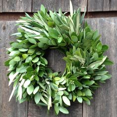 Fresh Bayleaf Wreaths, fresh bay leaf wreath from medina california, fresh bay leaf wreaths. Added on January 2018 at Flowers Mirror Above Fireplace, Fresh Bay Leaves, Ideal Shape, Year Round Wreath, Fall Harvest, Flower Designs, Fall Decor, Christmas Wreaths, Floral Wreath