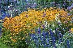 Perennial combination:  Antirrhinum majus, Snapdragons, Rudbeckia 'Goldsturm', Salvia 'Mystic Spires Blue', Salvia farinacea, Verbena bonariensis, summer borders