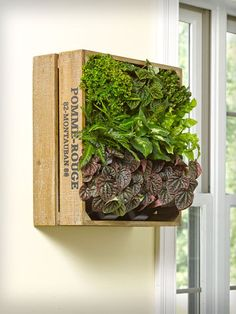 A stylish wall herb garden that saves space - harvest fresh herbs while adding lush greenery to your kitchen or an outdoor area. Handcrafted wooden wine crate vertical planter can stand on a countertop or mount on the wall.