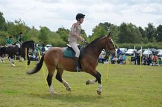 @HorseRangers tweets: Tx @RichmondTimes for listing our Gymkhana on Sept 5/6. All welcome. Pls support our charity http://www.richmondandtwickenhamtimes.co.uk/events/Hampton/1095159.Horse_Rangers_Gymkhana/ …