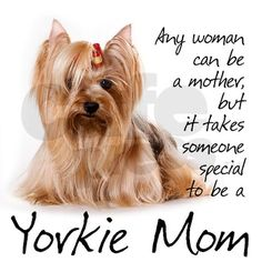 This Yorkshire Terrier gift will delight any Yorkie Mom. Yorkies, Yorkie Puppy, Chihuahua, Yorshire Terrier, Silky Terrier, I Love Dogs, Puppy Love, Cute Puppies, Cute Dogs
