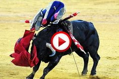 Incredible Spanish Bull Leapers Video #animals, #Spain, https://facebook.com/apps/application.php?id=106186096099420