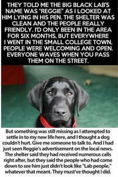 Man's About To Return Shelter Dog When He Reads Previous Owner's Note Baby Elephant Chasing Birds, Shelter Dogs, Animal Shelter, Animal Rescue, Cut Animals, Wild Animals, Cute Puppies, Cute Dogs, Black Lab Names
