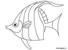 Fish Template To Color Drawn Angelfish Traceable Jellyfish Art And Illustration, Fish Coloring Page, Colouring Pages, Doodle Drawing, Doodle Art, Fish Drawings, Art Drawings, Fish Outline, Drawn Fish
