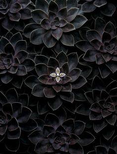 Editorial | Jewellery & Watches | Mitchell Feinberg