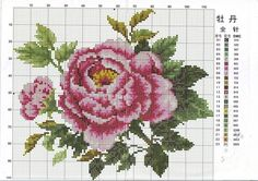 Gallery.ru / Фото #116 - розы разные - irisha-ira
