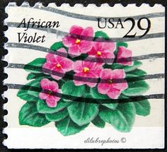 USA.  AFRICAN VIOLETS.  Scott 2486 A1849, Issued 1993 Oct 8, Self-Adhesive Die Cut, Photo, 29. /ldb.