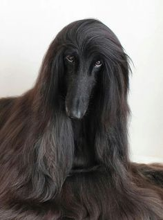 Mysterious black