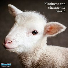 In a world where you can be anything, being kind is something we all can be.