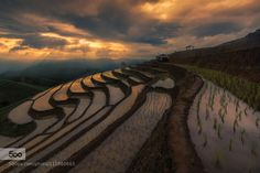 Rice Terrace by NiphonSmitthapipat. Please Like http://fb.me/go4photos and Follow @go4fotos Thank You. :-)