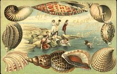 Vintage postcard with shell border. I have a number of these & bathing beauty cards  y