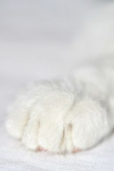 I love white paws, they look just like my Lucy girl's paws, except hers are a bit bigger!