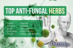 Fungal Overgrowth: Causes, Symptoms & Solutions - DrJockers.com Candida Fungus, Candida Overgrowth, Liver Detoxification, Organic Acid, Chronic Stress, Anti Inflammatory Diet, Neurotransmitters, Fungi, Vulnerability
