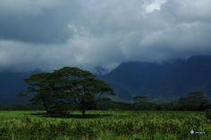 The Road to Opeakaa Falls in Kauai, Hawaii
