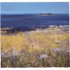 Paul Evans - Coastal Flowers - limited edition print