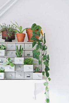 Via I Spy DIY | Green Plants