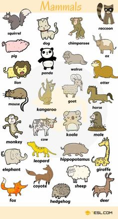 0 0 0 loves animals – keeping them as pets, seeing them at the zoo or visiting a farm… List … ANIMALS! List of animal names with animal pictures in English. Learn these types of animals to increase your vocabulary about animals in English and thus e Learning English For Kids, Kids English, English Language Learning, English Class, English Lessons, Teaching English, Education English, English Writing, English Study