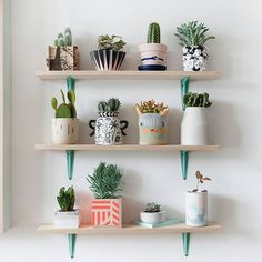 "4,277 Me gusta, 19 comentarios - کاکتوس🌸ساکولنتcactus🌵succulent (@amin_hajimohamadi) en Instagram: ""📷 : @dreamingandfound #🌵 #cactus #succulent #succulents #cacti #cacto #kaktus #кактус #多肉植物 #多肉…"""
