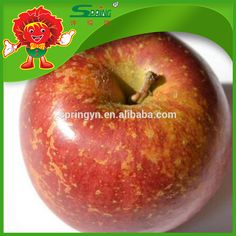 Fuji fresh honey apple companies selling fruit apple