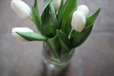 Stunning white tulips