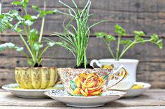 DIY herbs in a teacup. Eco-friendly favors!