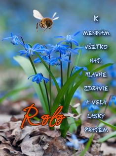 meninové priania Plants, The Oatmeal, Rolo, Flora, Plant
