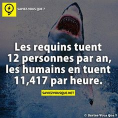 Les requins tuent 12 personnes par an – les humains en tuent par heure. Citation Pinterest, Good To Know, Did You Know, Albert Schweitzer, Things To Know, True Stories, Sentences, Slogan, Decir No