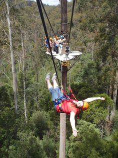 This is me 50M up in the air. Hollybank Treetops 26th Dec. #looknohands
