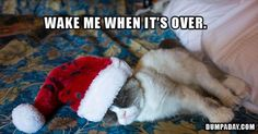 I feel you, Grumpy Cat. Especially since because it's November 1st, and everyone thinks they get the right to shove their love of Christmas everywhere.