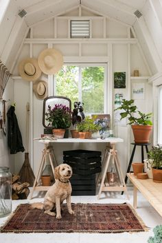 backyard shed interior with work table potted plants and dog Michelle Adams Ann Arbor Michigan by Marta Xochilt Perez