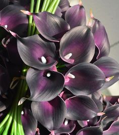 36PCS Real/Natural Touch Flowers Dark Purple Calla Lily for Wedding Bouquets