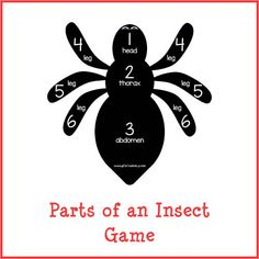 Parts of an Insect Game store product image