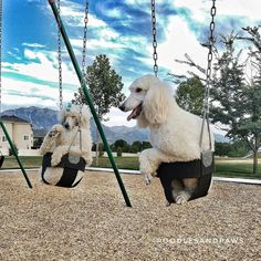 """Everyone's doing it so we just had to join in. They're such good pups. Maserati was in no hurry to get out after I was done taking the pic.  He seemed content to just to be lightly pushed in the swing while I talked to him like a """"wittle baby""""  #clowns"""