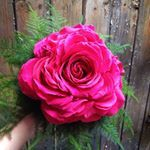 See Instagram photos and videos from Josephine Baker Flowers (@josephinebakerflowers)