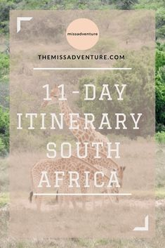 The MissAdventure inspires women to explore the globe together! Join our community of 000 amazing women and help us foster a culture of tolerance, learning and collaboration. Lions Head Cape Town, South Africa Safari, Wildlife Safari, Train Journey, Rhinos, Game Reserve, My Crazy, African Safari, Africa Travel